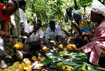 Forum-Nachhaltiger-Kakao