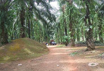 Forum-Nachhaltiges-Palmöl